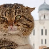 Несите в храм котов и корм для животных – для «освщения»: В подмосковном храме пройдет обновленческий «молебен о сохранении творения Божия»